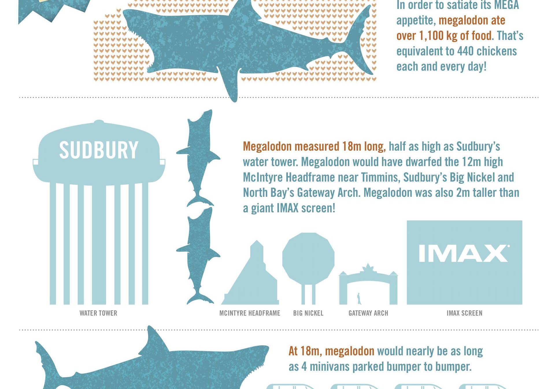 Science North Megalodon Infographic Shark Bites Dynamic Earth